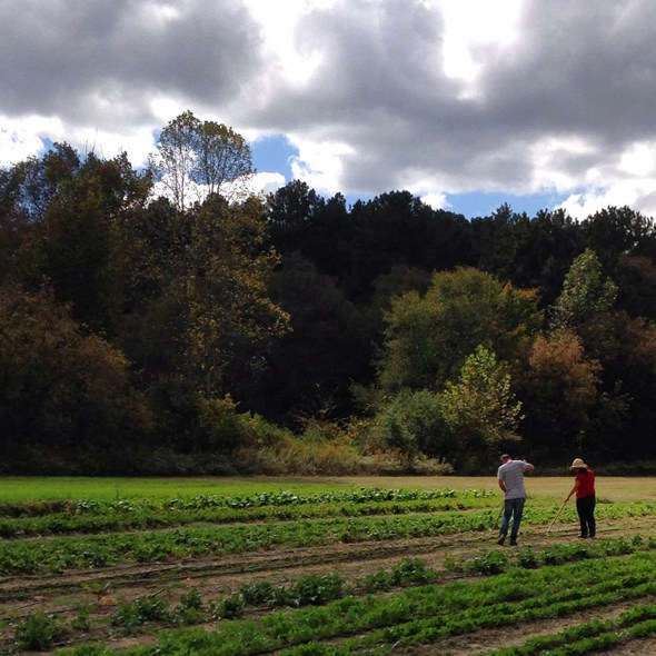 Local Farms Benefit From Cheaper Healthy Food